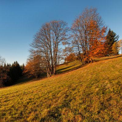 Podzimní ráno II